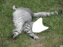 Tête de chaton