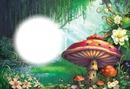 forêt champignon