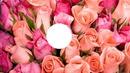 My Roses!!