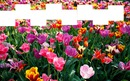 8 cadres dans les fleurs