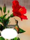 Colibri-fleur-nature