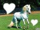Mes bébé acro au cheval