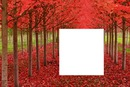 arboles rojos