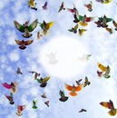 photo oiseaux bouchiba djelfa algerie