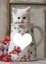 Mon chaton Soen