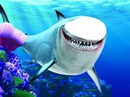 tiburon rosa
