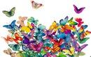 papillons exotiques 2 photos