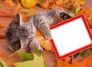 Podzim,kotě