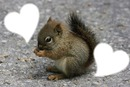 l ecureuil