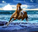free running horse at the ocean
