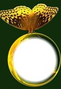 Cc esfera con mariposa