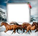 Cadre chevaux