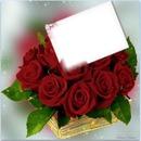 franco rose