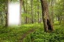 erdő táj