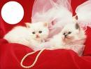 pour ceux qui aimes les chats