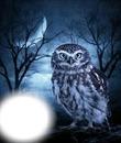 #owl; #wood;  #bluemoon