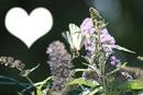Papillon et fleurs