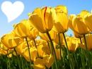 linda as flores né