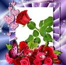 la rose rouge 02