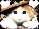 Gato fofinho com o olho azul