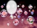 roses bulles