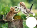 lindos gatitos 1 foto