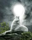 Loup qui hurle a la lune