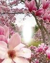 Cc jardin de flores rosa