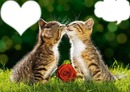 2 chatons amoureux