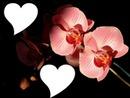 Coeur Orchidée