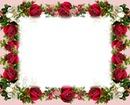 Quadro de Rosas em Botões!!