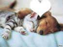 chien et chat 1 photo