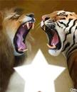 TIGRE LION