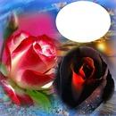 flores rojo y negro