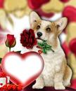 Chien love