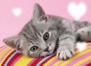 chaton d'un lover