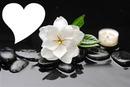 La fleur de Cardinia