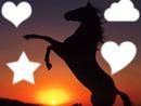 pixiz cheval