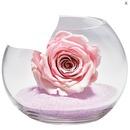 rose de sable