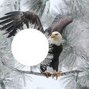 un aigle