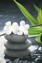 fleur tipanié blanche