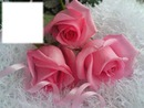 Cadre avec roses