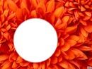 fleur orange d'amour