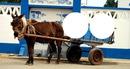Cavalo c/ 2 fotos