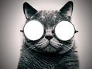 Chat à lunette