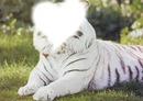 lion d'amour
