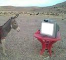 Ane devant la TV