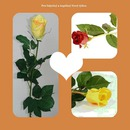 Růže v srdci