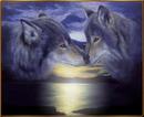 lobo en la noche2