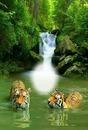 Cc bello paisaje con leones